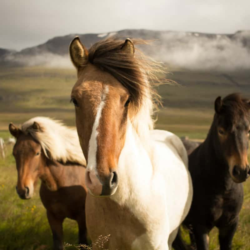 Horse Feed and Products
