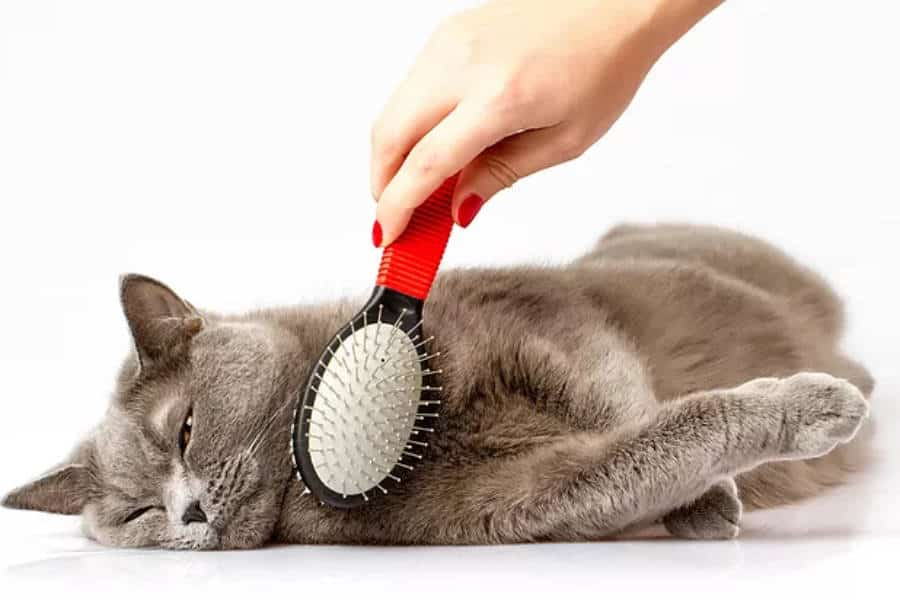 Do THIS To Your Cat For Premium Results