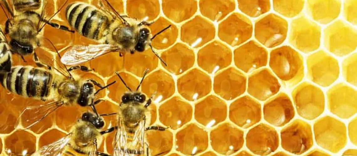 9 Tips To Get You Beekeeping Now!
