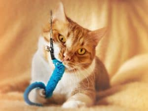 Milner Feed and Pet Supply Cat Toys