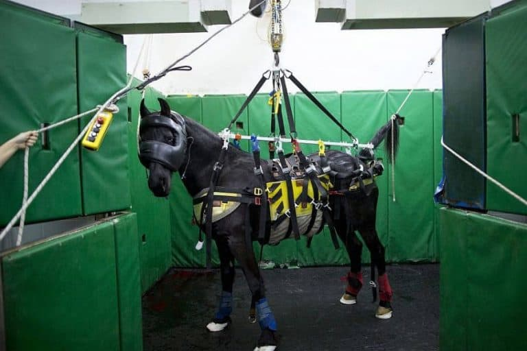 New Device Gives Healing Horses A Lift