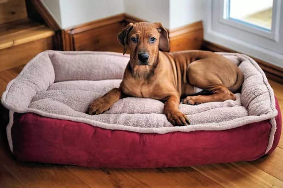 What You Didn't Want To Know About Your Dog's Bed